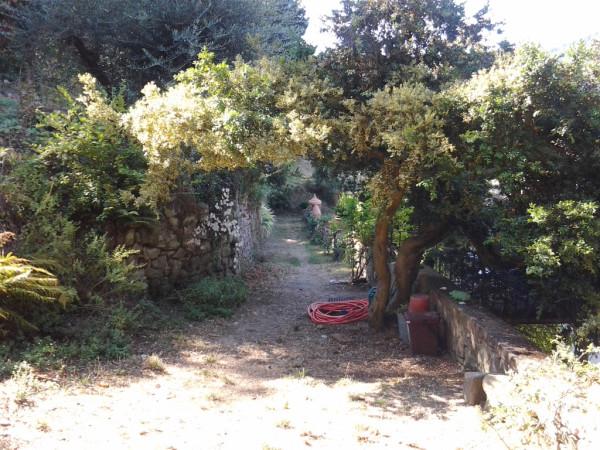 moncioni pinetum